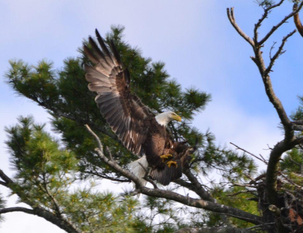 eagle-2-e1437597888803