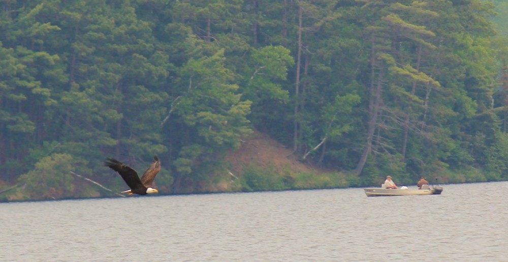 eagle-flying-e1437597871515