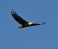 eagle-4-e1437597904836